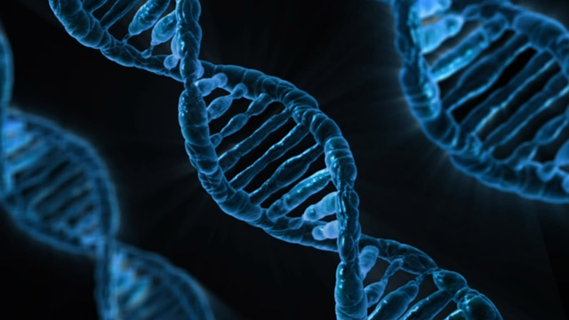 dna from pixabay.com